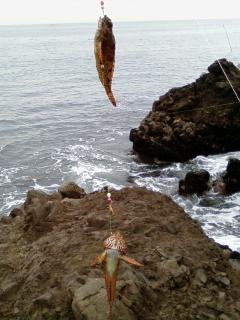夏休み打ち上げ釣行 つれました