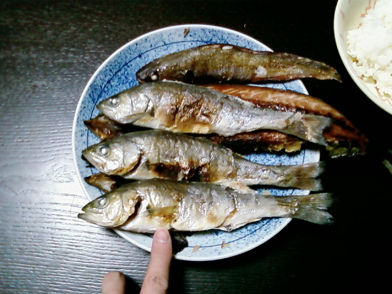 本日の釣果。亘理、松川浦、磯浜漁港2008年1月第一週