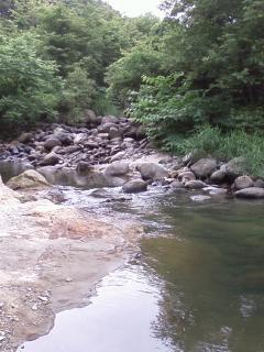 白石川水系 横川 渓流釣果報告2008年7月