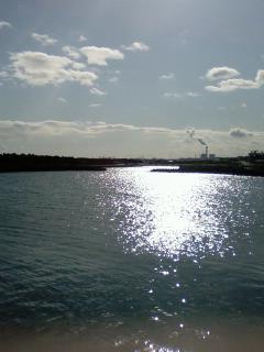2009年元旦 釣果 荒浜漁港、磯浜漁港。
