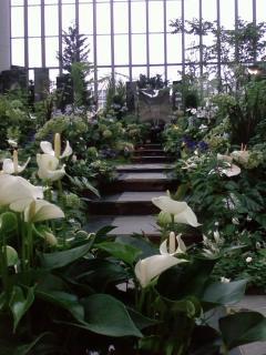 奇跡の星の植物園